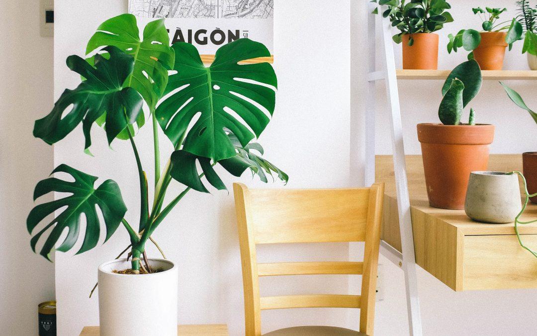 Hvad planter kan gøre ved dit hjem