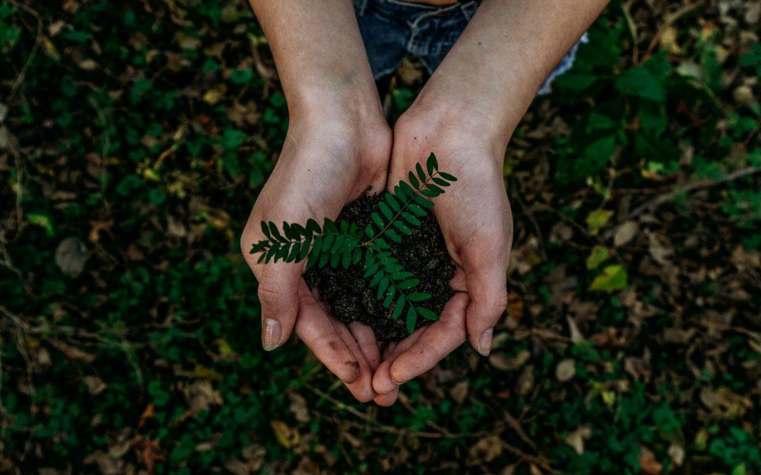 Fordele ved at købe bæredygtige produkter